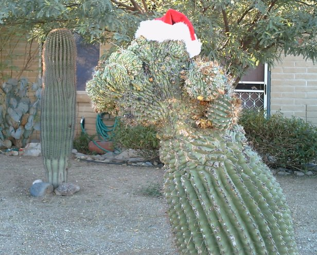tucson christmas cactus - Cactus Christmas Decorations